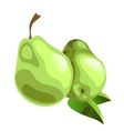 Two ripe green pear on white background vector image vector image
