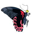 Butterfly black and red vector image vector image