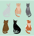 cartoon cute cat signs icon set vector image vector image