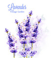 lavender watercolor background delicate floral vector image vector image