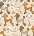 seamless pattern poodle dogs vector image vector image