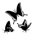 black silhouettes butterflies isolated white vector image
