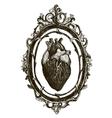 Human anatomical heart vector image
