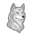 husky dog sketch vector image