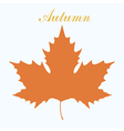 maple leaf design vector image vector image