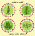 medicinal herbs 1 vector image vector image