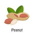peanut vector image vector image