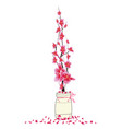 sakura flowers spring with bird cherry blossom vector image