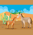 two horses in the desert field vector image vector image