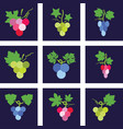 colorful icons grapes vector image