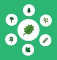 icon flat bio set of spruce evergreen rosemary vector image vector image