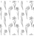 seamless pattern with narcissus vector image vector image