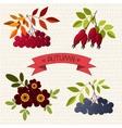 Autumn Mountain ash chokeberry rose marigold vector image vector image