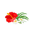 beautiful tropical flower hibiscus and frangipani vector image