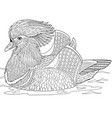 mandarin duck adult coloring page vector image