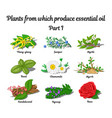 plants from which produce essential oils vector image vector image