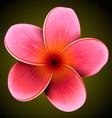 Plumeria flower vector image vector image
