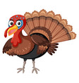 a turkey on white background vector image vector image