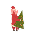 cute pig carrying christmas tree funny piggy vector image