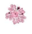 Japanese cherry Bouquet of pink sakura blossom vector image vector image