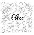 set black and white outline olive branch vector image vector image