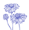 flower marguerite vector image