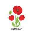 anzac day bouquet poppy flowers vector image vector image