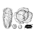 Cabbage hand drawn set vector image