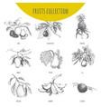 exotic fruits botanical sketch set vector image