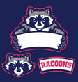 raccoon in sport mascot style hold the blank vector image vector image