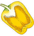 yellow bell pepper in cross section vector image vector image