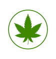 cannabis leaf on white background illegal drug vector image vector image