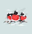 funny bullfinches on tree vector image vector image