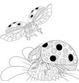 ladybugs and daisy flowers adult coloring page vector image