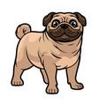 cartoon pug dog mascot vector image vector image