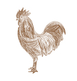 Hand drawn Cock vector image