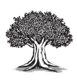 Oak Tree Logo Design vector image vector image