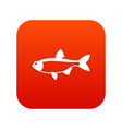 rudd fish icon digital red vector image