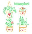set cactus houseplant vector image