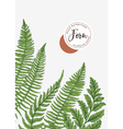background with leaves of fern vector image vector image