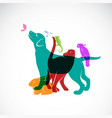 group pets - dog cat parrot chameleon rabbit vector image