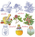 medicinal herbs 2 vector image vector image