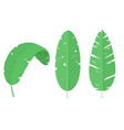 set of three tropical green leaves vector image vector image
