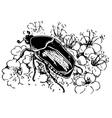cetonia aurata vector image vector image