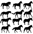 Set silhouette of horse vector image vector image