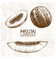 digital detailed melon hand drawn vector image
