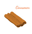 cinnamon cartoon flat style vector image vector image