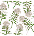 colored background with wild rosemary vector image