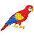 Cute macaw bird cartoon posing vector image vector image