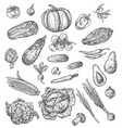 vegetable and mushroom sketch of fresh veggies vector image vector image